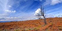 Lonley Lava-Tree by Sylvia Seibl