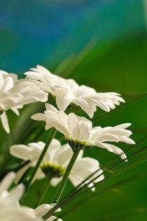 Flower Dance by Sylvia Seibl