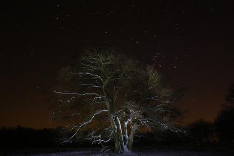 Nachtbaum1