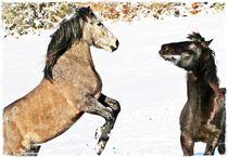 Lets play Horse von Sandra  Vollmann