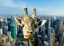 Giraffe in New York by kattobello