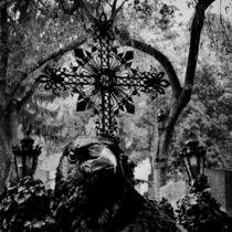 Rabe auf dem Friedhof von kattobello