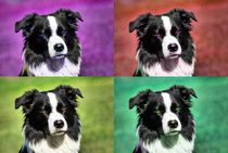 Pop Art Border Collie 1 by kattobello