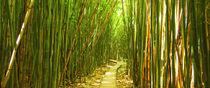 Bamboo Path by Sylvia Seibl