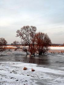 Kalte Zeiten by voelzis-augenblicke