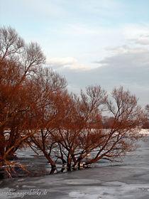 Winteridylle am alten Oderstrom von voelzis-augenblicke