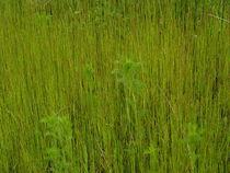 Disteln im Gras von Torsten Jäger