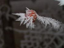 Winterkunst von Torsten Jäger