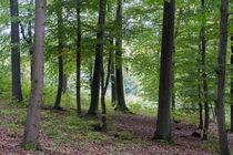 Eine lichte Stelle im Laubwald von Ronald Nickel