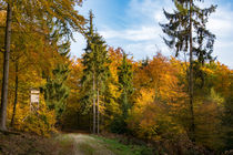 Herbstwald unter blauem Himmel by Ronald Nickel