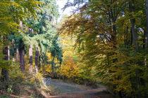 Mischwald im Herbst von Ronald Nickel