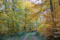 Wandern im Herbstwald von Ronald Nickel