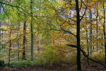 Impressionistischer Herbstwald von Ronald Nickel
