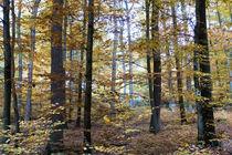 Herbstwald mit Buchen und Eichen von Ronald Nickel