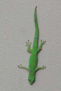 Green gecko on a wall von stephiii