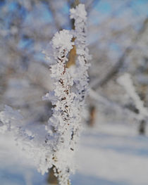 Snow crystal by Michael Naegele