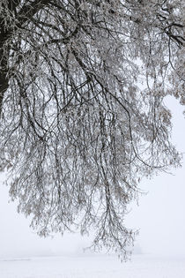 A tree in wintertime, dreaming von anando arnold