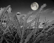 Snow crystals with moon von Michael Naegele