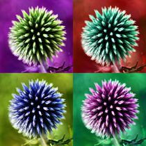 Pop Art Kugeldistel von kattobello