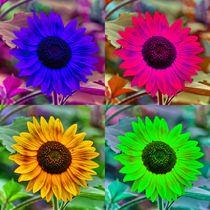 Pop Art Sonnenblume by kattobello