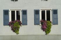 Zwei blaue Fensterläden mit Blumenkästen by stephiii