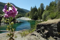 Foxglove in front of a crystal clear river on Vancouver island in Canada von stephiii