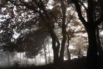 Mystischer Wald im Nebel von Ronald Nickel