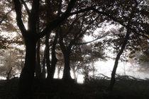 Silhuetten  im mystischen Wald von Ronald Nickel