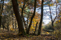Der Herbst im naturnahen Wald von Ronald Nickel