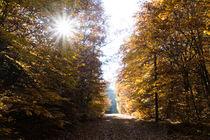 Die Sonne beherrscht den Herbstwald von Ronald Nickel