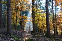 Spotlight im Herbstwald von Ronald Nickel