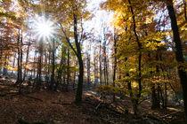 Sonnensein im Herbstwald von Ronald Nickel