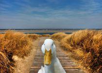 Pekingente an der Nordseeküste by kattobello