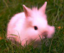 Pink Bunny von kattobello