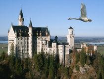 Schwan über Schloss Neuschwanstein von kattobello