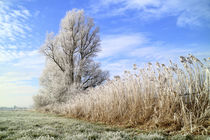 Frost in Ostfriesland von ropo13