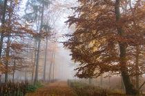 Mystischer Herbstwald im Nebel von Ronald Nickel