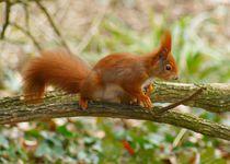 Eichhörnchen Balance by kattobello