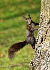 Braunes Eichhörnchen an einem Baum von kattobello