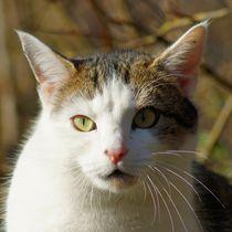 Katzen Blick by kattobello