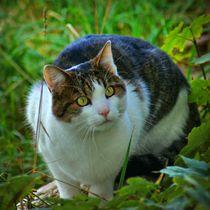 Katze in der Wiese von kattobello