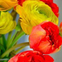 Blumen by Julia H.