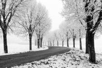 Winter Allee von Thomas Matzl