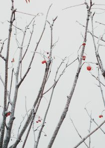 Frosted berries by Andrei Grigorev