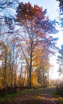 An einem mächtigen Baum im Herbst von Ronald Nickel