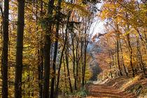 Wandern im goldenen Herbst by Ronald Nickel