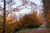 Ausblick im nebligen, lichten Herbstwald by Ronald Nickel