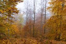 Laubbäume im goldenen Herbstkleid von Ronald Nickel
