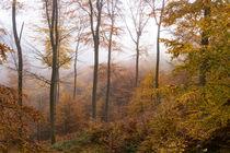 Leuchtende Farben im Herbstwald von Ronald Nickel