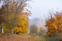 Nebel liegen im Herbstwald von Ronald Nickel
